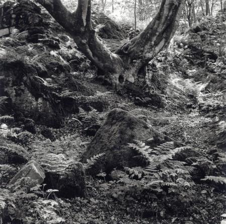 Derbyshire Glade