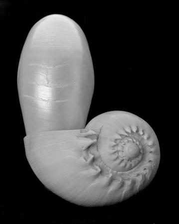 Nautilus & Companion - 2