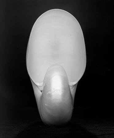 Nautilus - 2
