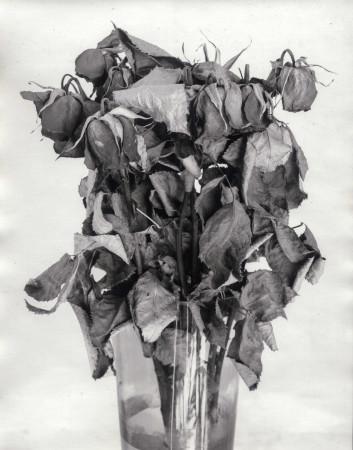 Old Roses-SilverPrint-2015